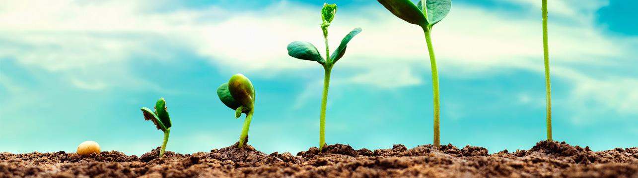 creixement planta
